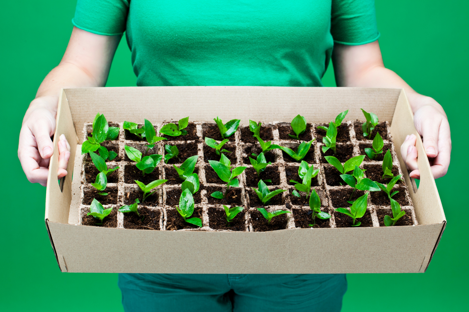How To Save Vegetable Seeds To Grow At Home